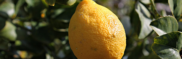 lemon-611888_1920